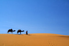 Kamelen en touareg Stock Foto