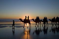 Kamelen op het Strand, Broome, Westelijk Australië stock afbeeldingen