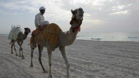 Kamelen op het strand van Doubai stock video