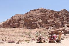 Kamelen in Petra, Jordanië Royalty-vrije Stock Foto