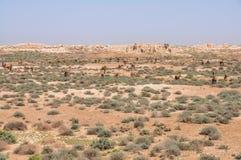 Kamelen in Turkmenistan stock foto's