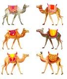 Kamelen in waterkleur Royalty-vrije Stock Foto's
