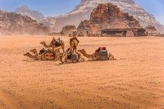 Kamelen in woestijnlandschap onder blauwe hemel Stock Afbeelding
