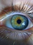 Kameleonów oczy Obrazy Stock