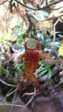 kameleon Obraz Stock