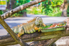 Kameleon en voedsel royalty-vrije stock afbeeldingen