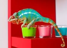 Kameleon i świeczki na czerwonym tle Fotografia Stock