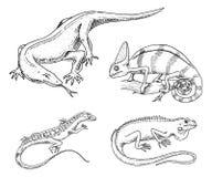 Kameleon jaszczurka, amerykanin zielona iguana, gady, węże lub Komodo smok monitor, trawożerni gatunki wektor royalty ilustracja