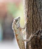 Kameleon na drzewie na natury tle Zdjęcie Stock