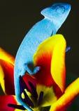 Kameleon op de tulp Stock Afbeelding