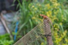 Kameleon op houten groene achtergrond Royalty-vrije Stock Foto