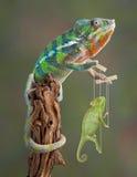 Kameleon Puppetmaster stock fotografie