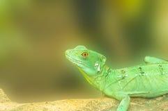 Kameleon stawia czoło gałąź Fotografia Stock