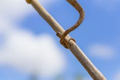 Kameleonstaart op een tak op een blauwe hemelachtergrond die wordt gebonden stock foto