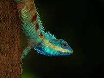 Kameleont på träd Royaltyfri Fotografi