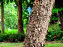 Kameleont på träd Arkivfoto