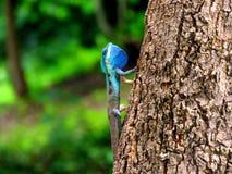 Kameleont på träd Arkivfoton