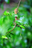 Kameleont på treen Arkivbilder