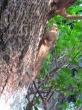 Kameleont som tycker om i varm sommar royaltyfria bilder