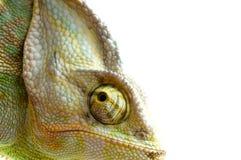 kameleontblomma royaltyfri foto