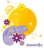 kameleontblommor Arkivfoto
