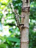 Kameleonten klättrar trädet arkivbilder