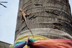 Kameleontlås på ett träd Arkivbild