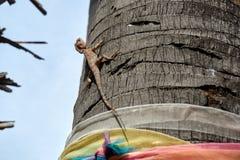 Kameleontlås på ett träd Royaltyfri Foto