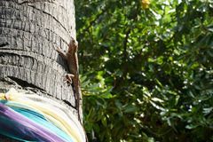 Kameleontlås på ett träd Royaltyfria Bilder