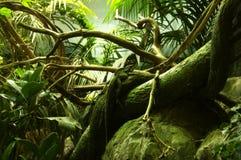 kameleontviena Arkivbild