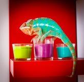 Kameleonu obsiadanie na świeczkach Obrazy Royalty Free