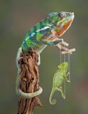 kameleonu puppetmaster Fotografia Stock