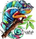 Kameleonu rysunek Zdjęcie Royalty Free