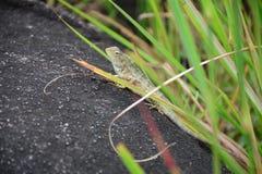 Kameleonu zbliżenia widok fotografia stock