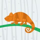 Kameleonzitting op een tak Stock Afbeeldingen