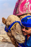 Kamelfahrer mit seinem Kamel Stockfotos