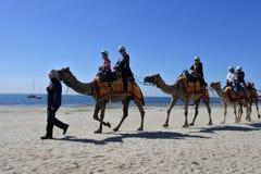 Kamelfahrt auf den Strand von Geelong Victoria Australia stockfotos