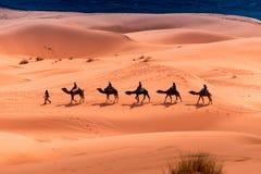 Kamelfahrt durch die Wüste lizenzfreie stockfotografie