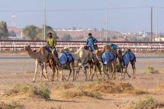 Kamelhirten gehen durch Rennstrecke stockfotografie
