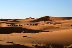 kamelhusvagnöken sahara Royaltyfri Foto