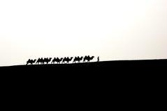 Kamelhusvagn Royaltyfri Bild