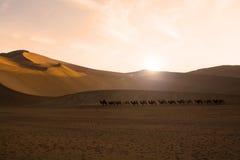 Kamelhusvagn Royaltyfria Bilder