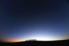 Kamelhusvagn i ökengryningen Arkivfoto