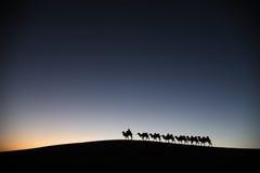 Kamelhusvagn i ökengryningen Fotografering för Bildbyråer