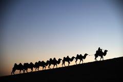 Kamelhusvagn i ökengryningen Arkivfoton