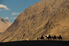 Kamelhusvagn i öknen Royaltyfri Foto