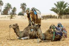 Kamelhusvagn i den Sahara öknen, Afrika Arkivbilder