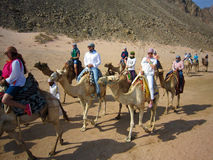 Kamelhusvagn i Sahara Royaltyfri Fotografi