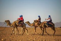 Kamelhusvagn med turister som g?r till och med Sahara Desert royaltyfri bild
