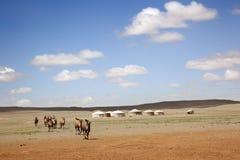 Kamelhusvagn Mongoliet Royaltyfria Foton